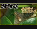 第37位:貴重映像?ツムギアリが糸を紡いで巣を作る! thumbnail