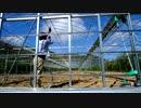 第26位:きゅうり栽培実況vol.50   ハウスを作る編④実際にきゅうりを作るときのことを考えて。。。 thumbnail