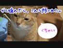 ガム噛んだら猫に嫌な顔されました( ゚Д゚)