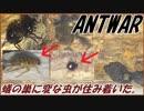 第50位:トゲアリの巣に住みついた奇妙な同居者たち。 thumbnail
