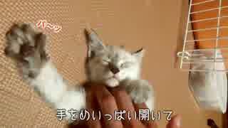 気持ちよすぎて阿波おどりを踊っちゃう子猫【エアーふみふみ】