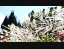 ゆっくりの田舎と自然 27話「夏が通りすぎて、」