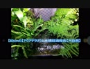 【60cmの】アクアテラリウム経過報告【大自然】