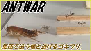 ツムギアリ警察と逃走するゴキブリ。