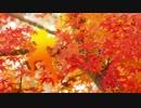【BASARALOID】紅一葉【山中鹿之介】