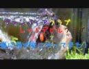 【ドワーフクラブ】新規カニ水槽立ち上げ!③ ~ドワーフクラブ導入編~【アクアリウム】