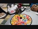 第92位:【アメショ】全自動猫じゃらしの食いつきがなかなか良かった件 thumbnail