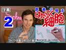 医者が見る はたらく細胞 2話 (赤血球のアホ毛が気になる) 外国人の反応【日本語字幕】 thumbnail