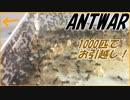 第50位:冬のコロニー全滅を防げ!ケアリ1000匹コロニーのお引越し。 thumbnail