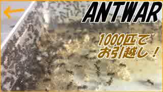 冬のコロニー全滅を防げ!ケアリ1000匹コロニーのお引越し。
