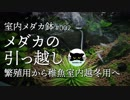 【室内メダカ鉢#2】メダカの引っ越し。繁殖用から稚魚室内越冬用へ。
