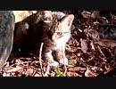 ニコニ広告&コメントで政治ランキング1位をお猫様にする