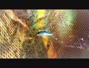 【石川県観光・小松市、Japan Travel Ishikawa、Komatsu】2018年9月22~10月8日、木場潟で夜釣り、買い物等の没動画まとめた日記動画【VLOG】