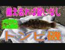 第61位:釣り動画ロマンを求めて 197釣目(トンビ磯) thumbnail