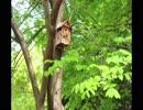 【癒し】小鳥の鳴き声(睡眠用BGM・作業用BGM)