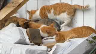 朝起きたら野良猫がうじゃうじゃ集まってた