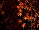 【とうらぶ吹奏楽企画アレンジ】ヒカリ断ツ雨