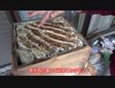 【素人養蜂 Part36】初めての収穫その1 巣箱の切り離しです