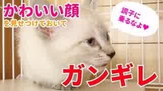 かわいい顔を見せつけたあとガン切れする子猫【YouTuberとしての目覚め?】