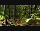 Video Of Forest 鎌田節子