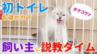 初トイレを覗かれて飼い主にマナーを説く子猫
