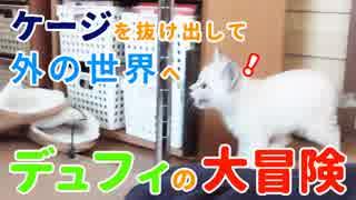 ケージを脱出!デュフィの大冒険 〜子猫が新居を探検〜