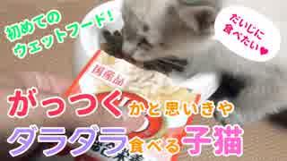 初めてのウェットフードにがっつく!かと思いきやダラダラ食べる子猫