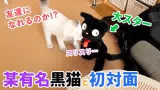 某有名黒猫と初対面した子猫の反応やいかに…!?