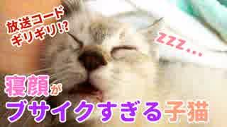 眠る子猫の顔がブサイクすぎる!【放送コードギリ!?】