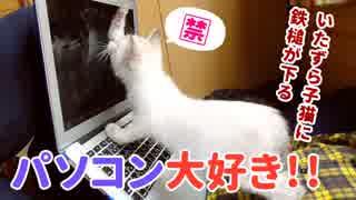 子猫がパソコンにいたずら…ついに鉄槌がくだる!