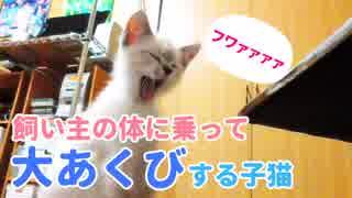 飼い主を尻に敷く子猫【体の上がリビング】