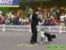 チャップリン犬