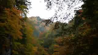紅葉をみにいこうよう! ~ちょっと沢登り編~