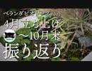 【ベランダビオトープ#2】4月立ち上げ〜10月末 振り返り