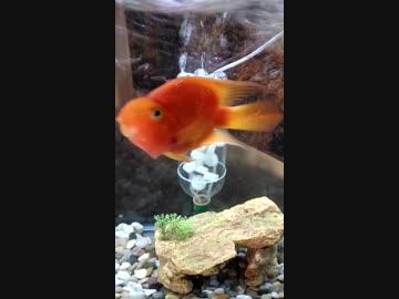 filter for aquarium 古保達也 by 古保達也 エンターテイメント 動画