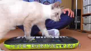 ピアノを弾きこなす天才音楽家の猫