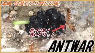 沖縄台湾でアリ探しの旅。果樹に群がる赤いアリを見つけた!