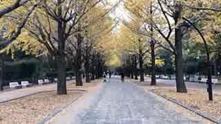2018年11月19日1枠目  東京都練馬区 曇りの日だから光が丘公園の紅葉の様子でも見に行こう