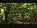 第42位:オ蘭ウータンの森