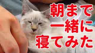 子猫のデュフィと朝まで一緒に寝てみたら…【デュフィの観察動画】