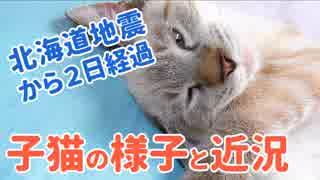 北海道地震から2日。子猫のデュフィの様子や地震の近況について