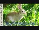野うさぎ観察日記 #01 庭にウサギが住み着いてた!【ニュージーランド】