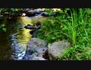 River Water Flowing 和田勝海