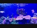 海水魚の餌やり風景