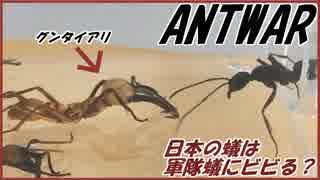 世界最恐のグンタイアリを日本アリのエサ場に入れたらさすがにビビる?