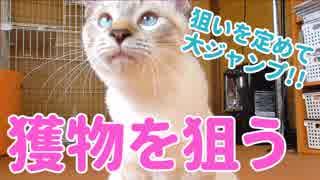 欲望のままに襲いかかる子猫に食われる疑似体験をする動画