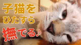 子猫の身体が柔らかすぎて寝相がおかしなことに…