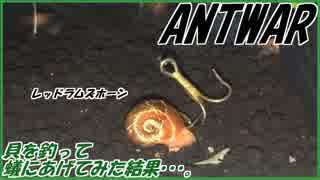 アクアリウムで育てた貝を釣って、アリにあげてみた。