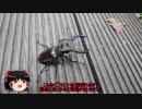 第77位:【ゆっくり車載】子連れライダーの旅行記【NM4-02】その11 thumbnail