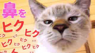 子猫が食べ物の匂いに鼻をヒクヒクさせる顔がかわいすぎた